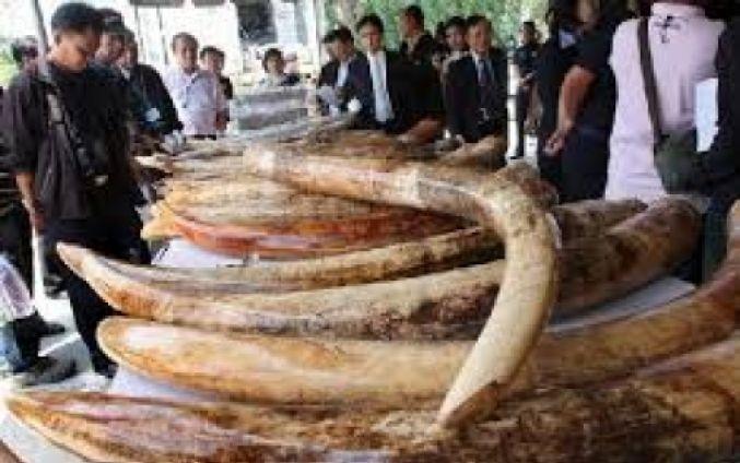 Hong Kong abolirá por completo el comercio de marfil